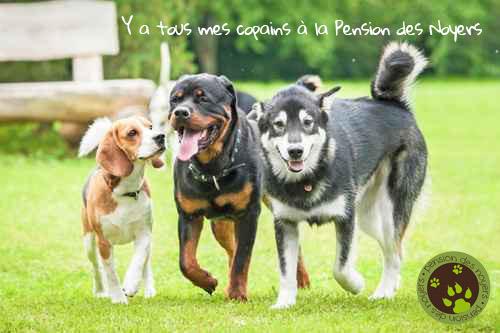 pension chien dijon bourgogne