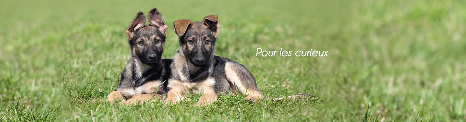 pension chien bourgogne dijon