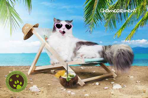 pension des noyers chien chat dijon
