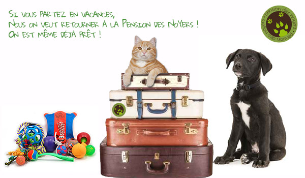 Pension chien chat dijon